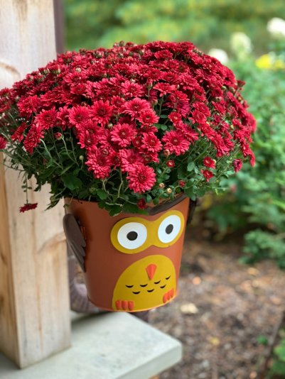 mum-red-plant-hoot
