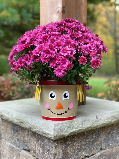 pink-mums-harvey-planter